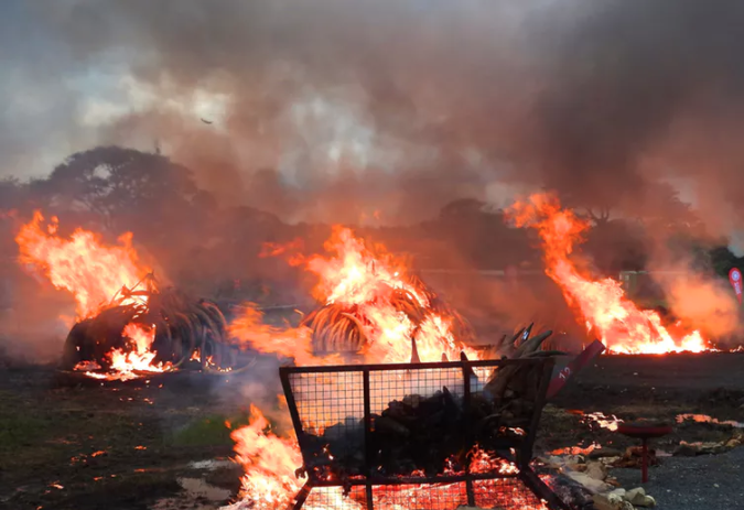Image: Ivory up in flames, but who really noticed? How messages on elephant poaching might be missed