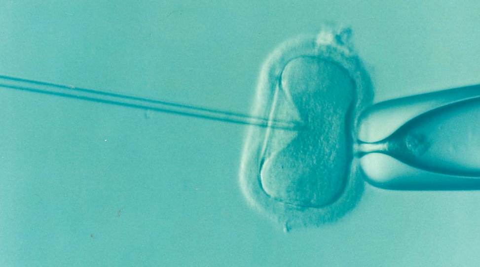 Image: Frozen embryos better than fresh for women struggling to get IVF to work