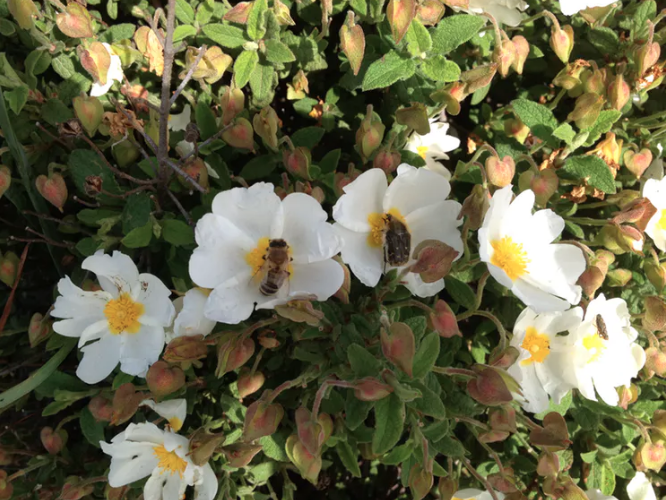 Featured image: Plants use advertising-like strategies to attract bees with colour and scent