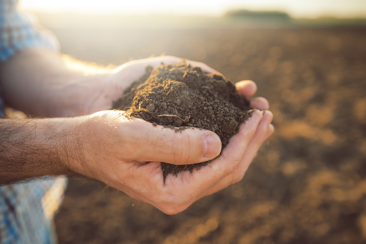 Featured image: Our soils: more than meets the (developer's) eye