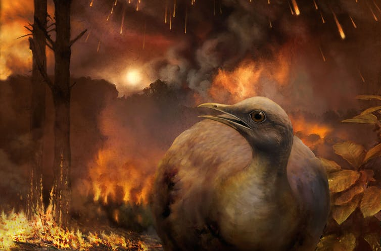 Featured image: How birds survived the dinosaur-killing asteroid