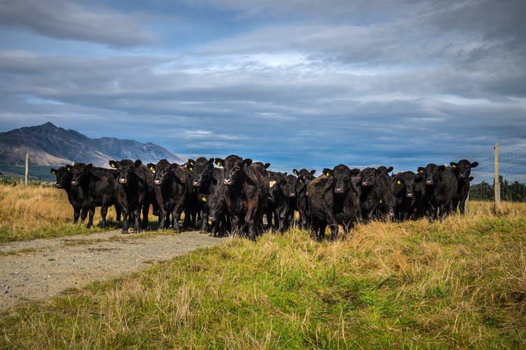 Image: New Zealand's zero carbon bill: much ado about methane