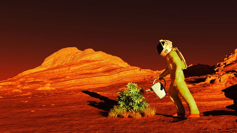 Featured image: How to grow crops on Mars if we are to live on the red planet