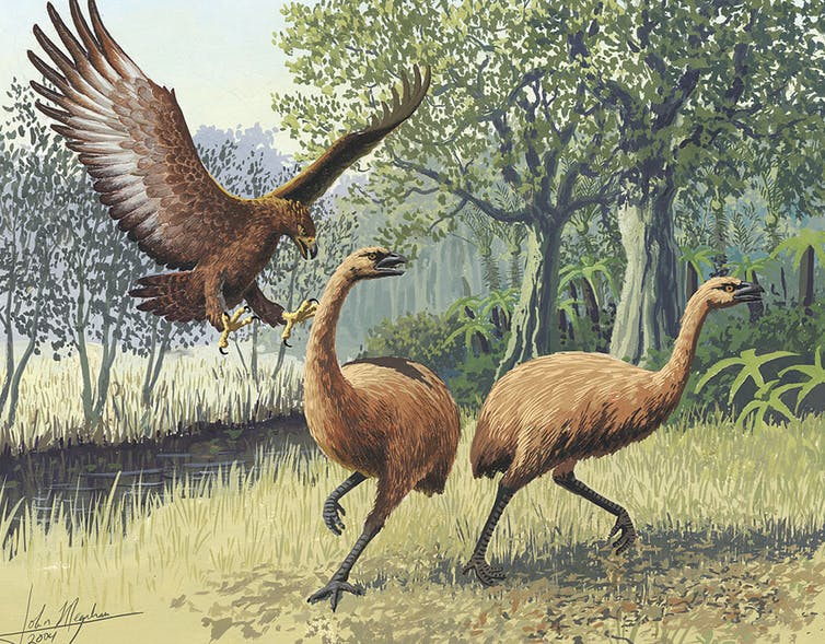 Featured image: Dead as the moa: oral traditions show that early Māori recognised extinction