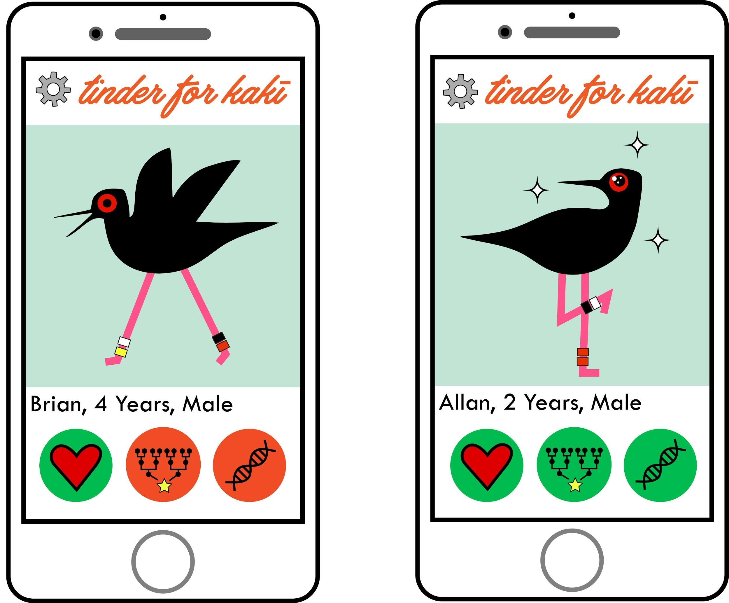 Featured image: Novel science communication sees Bird of the Year take on Tinder