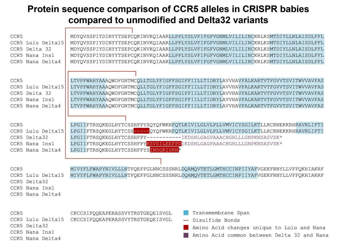 CCR5 gene variants, including those in Lulu and Nana. Posted to Twitter by Sean Ryder, Professor at UMass Medical School (@RyderLab).