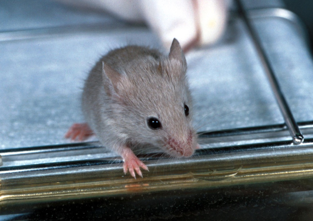 Featured image: A gene drive in mice – but only for females