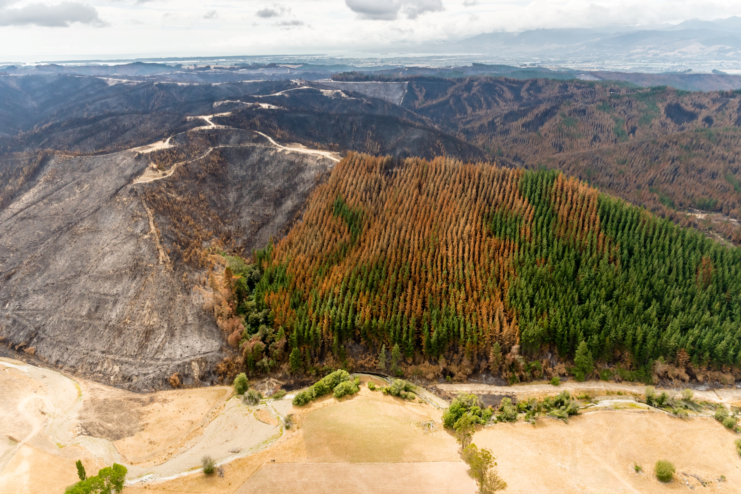 Image: Tasman forest fires – the role of fire breaks