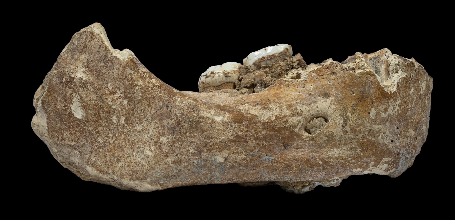 Featured image: The discovery of a Denisovan jaw bone and what it can tell us