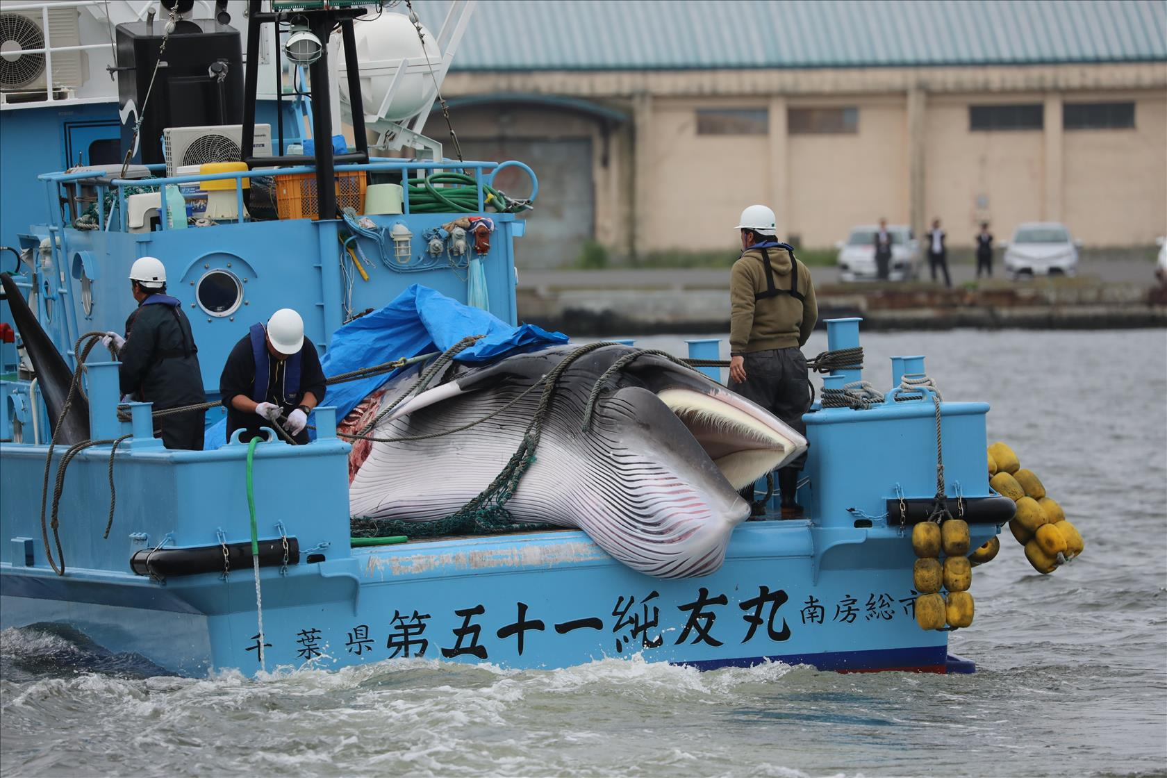 Featured image: Japan resumes commercial whaling – researchers on how the world should respond