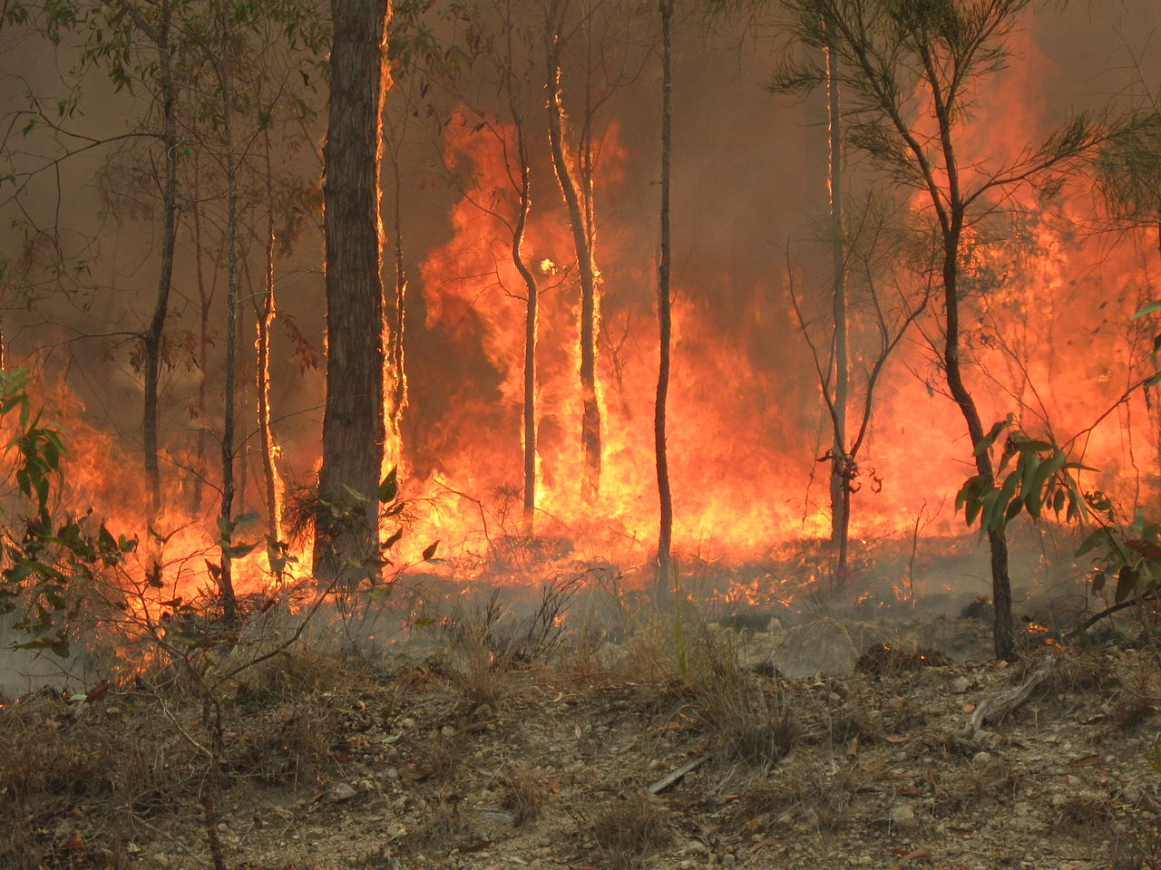 Featured image: Climate change will fuel bush fires