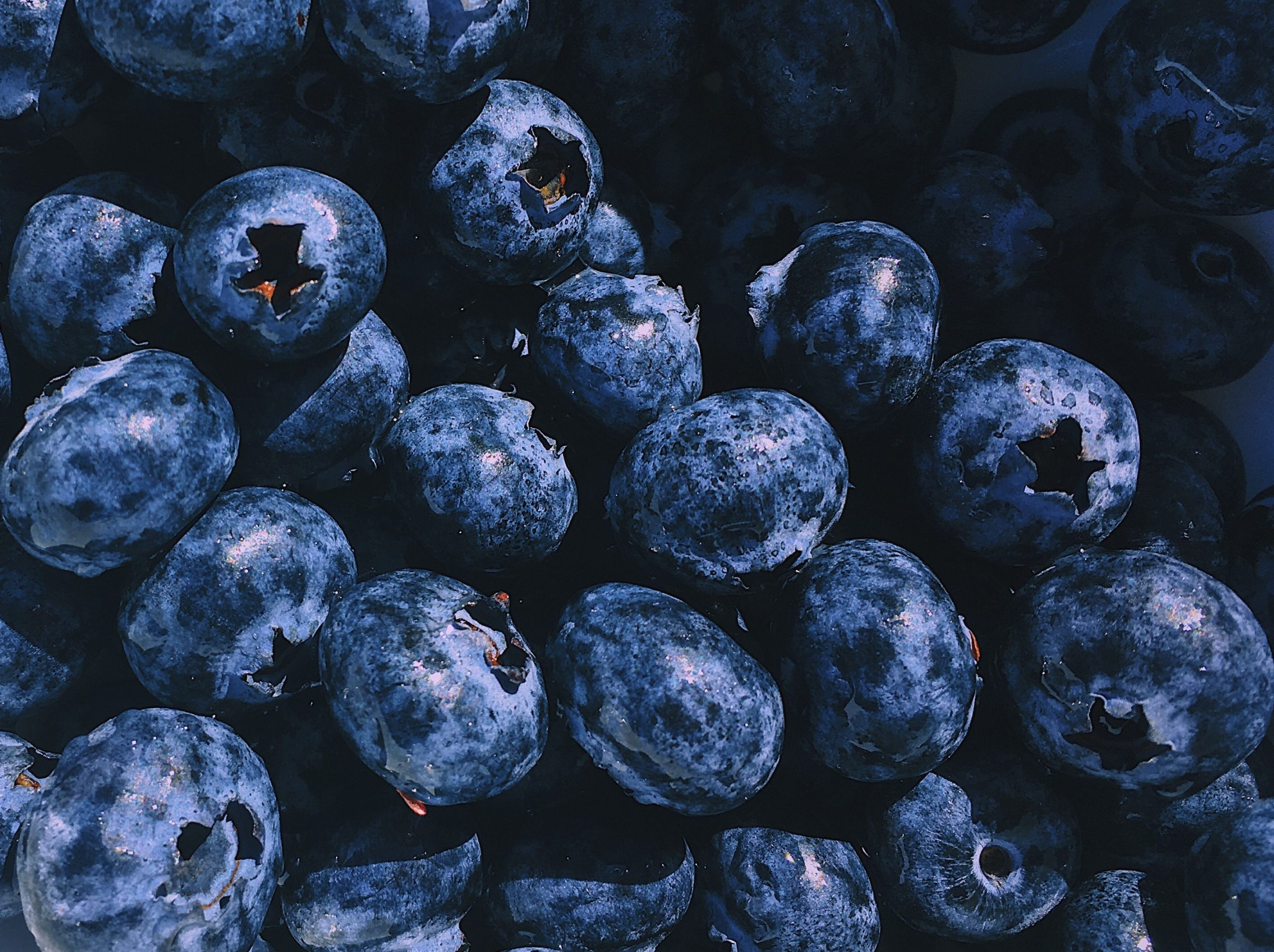 Image: The importance of the humble blueberry