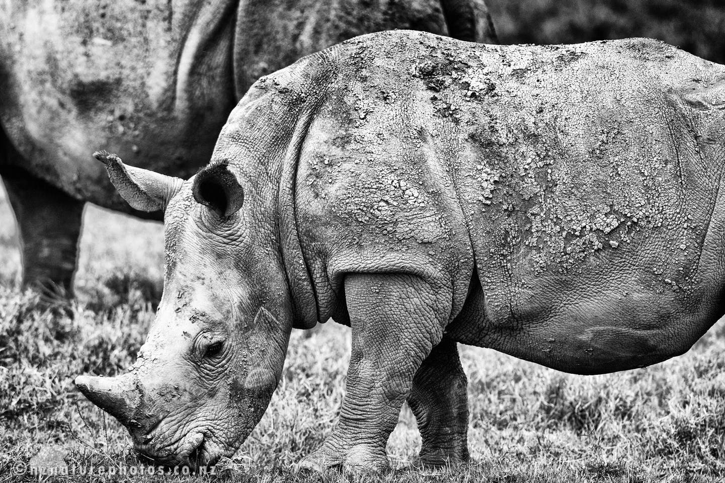 Featured image: Black Rhino Photo