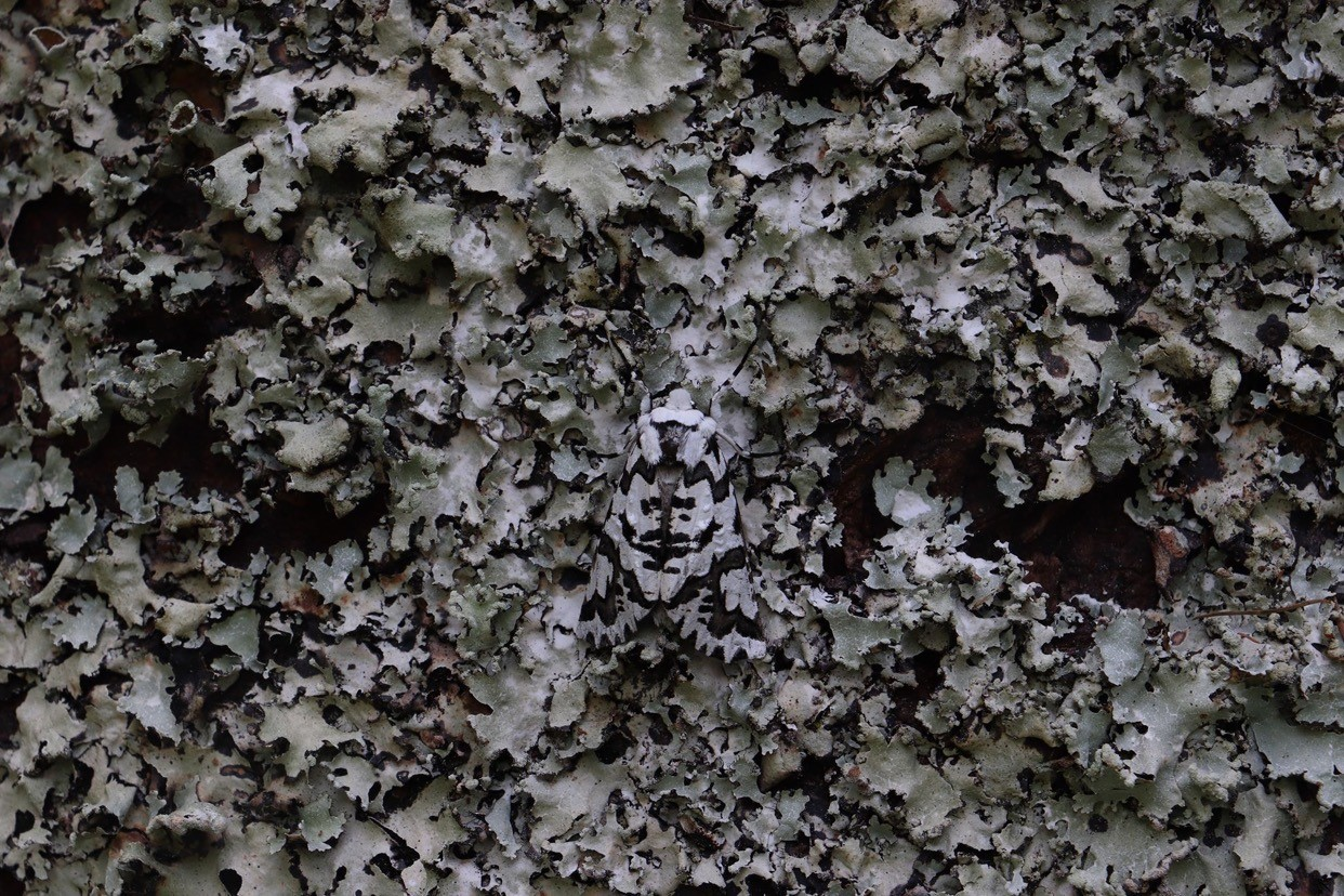 Featured image: The SMC Video Competition: The Science of Camouflage
