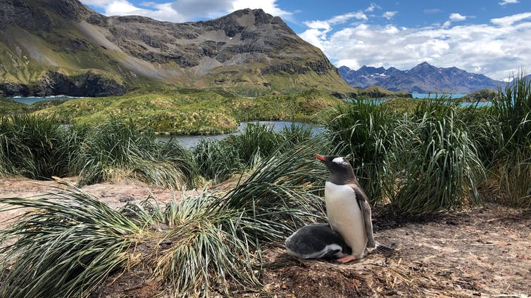 Featured image: How we discovered three new species of penguin in the Southern Ocean