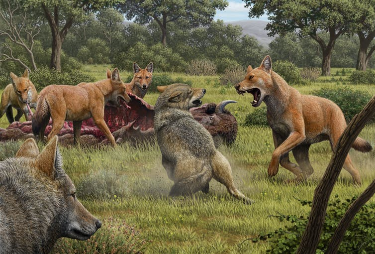 Featured image: Dire wolves went extinct 13,000 years ago but thanks to new genetic analysis their true story can now be told