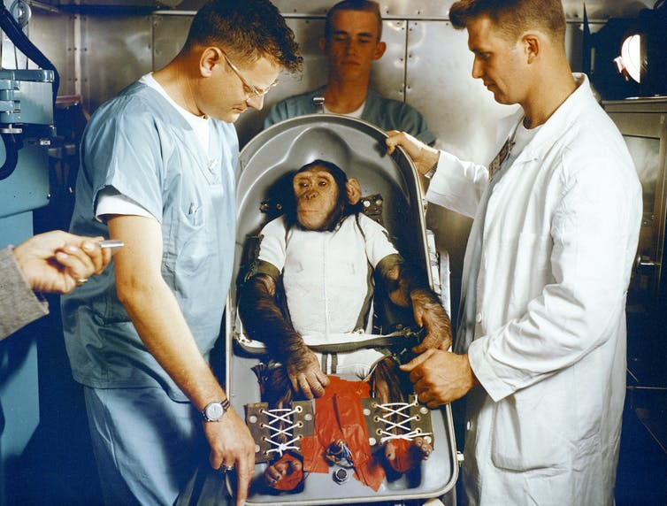 Featured image: Apes, robots and men: the life and death of the first space chimp