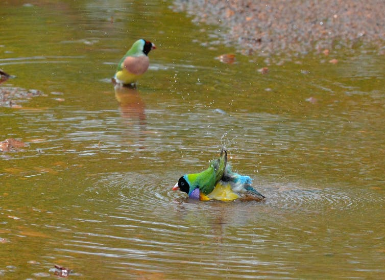 Featured image: The secret life of puddles: their value to nature is subtle, but hugely important