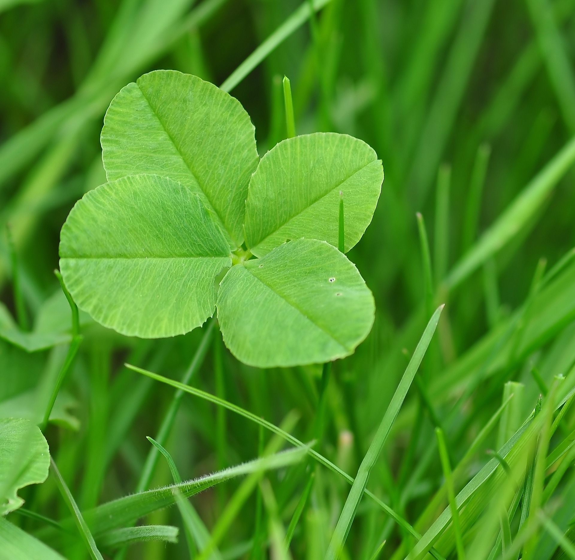 Image: Where are all the four-leaf clovers? And what does that have to do with learning to code?