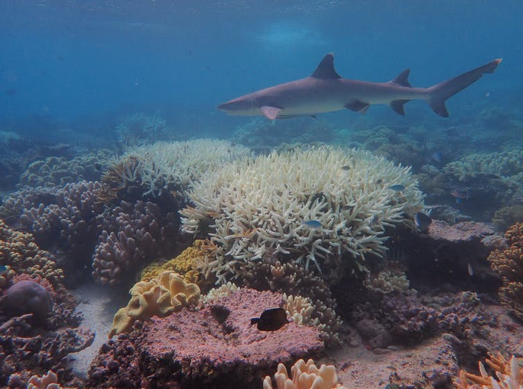Image: The outlook for coral reefs remains grim unless we cut emissions fast — new research