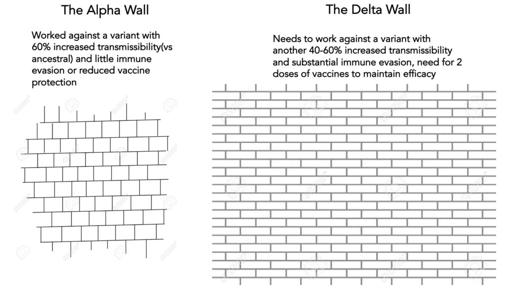 Two walls for Alpha and Delta variants